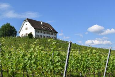 Gasthaus & Weinberg Leutschen